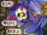 オダマキ解説.jpg