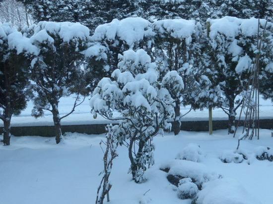 今朝の庭①.JPG