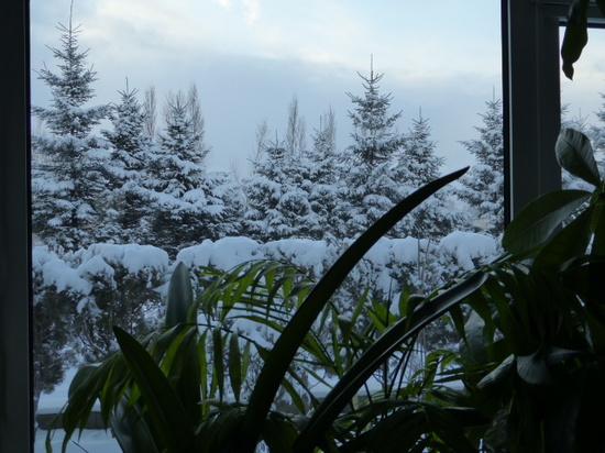 今朝の庭②.JPG