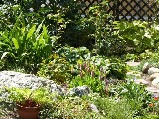 色の乏しい庭です。.JPG