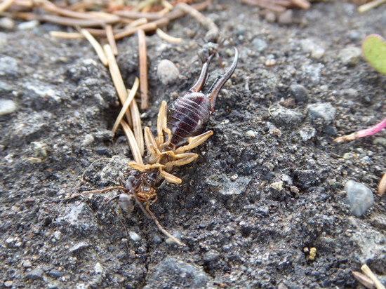 蟻①.JPG