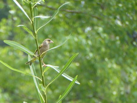 野鳥6.JPG