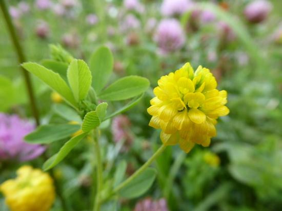 17黄色い花②.JPG