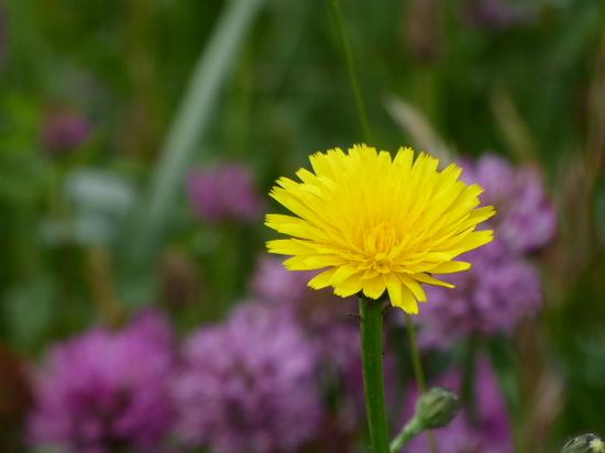 18黄色い花③.JPG